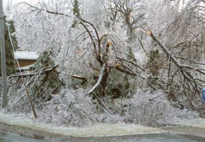 Ice Storm Damage on Maiden Lane