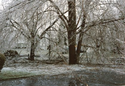 Tree Damage from the 1991 Ice Storm