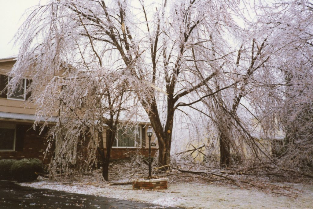 Tree Damage from 1991 Ice Storm